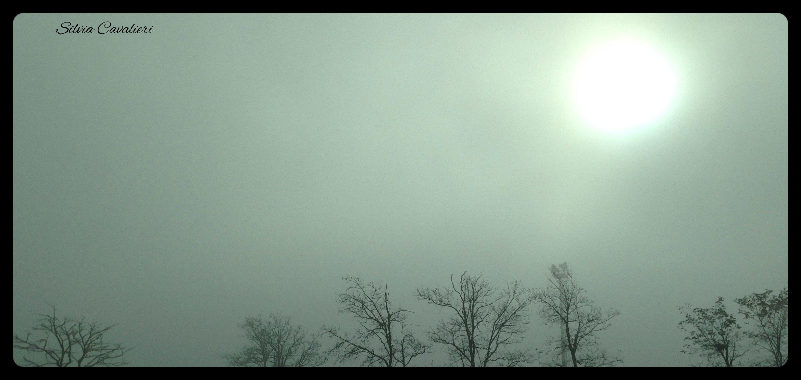 alberi nella nebbia