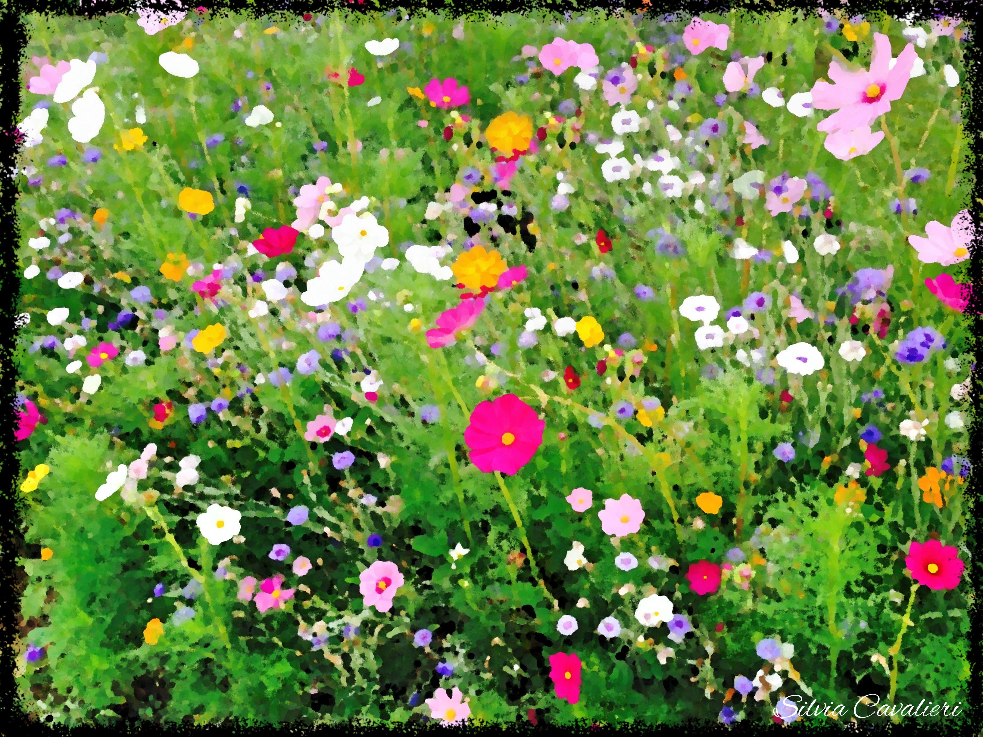 fiori di campo olio
