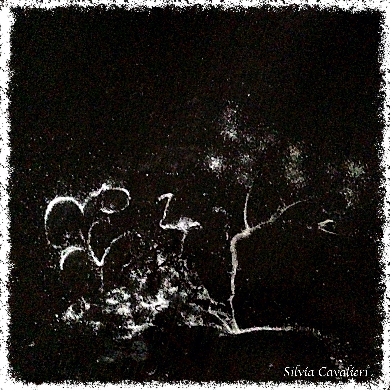 fenicottero bianco nero