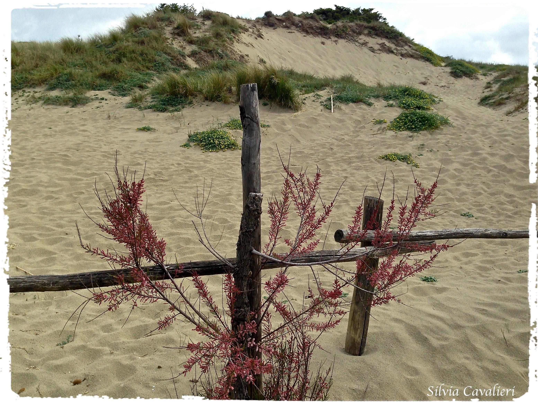 duna col rosa