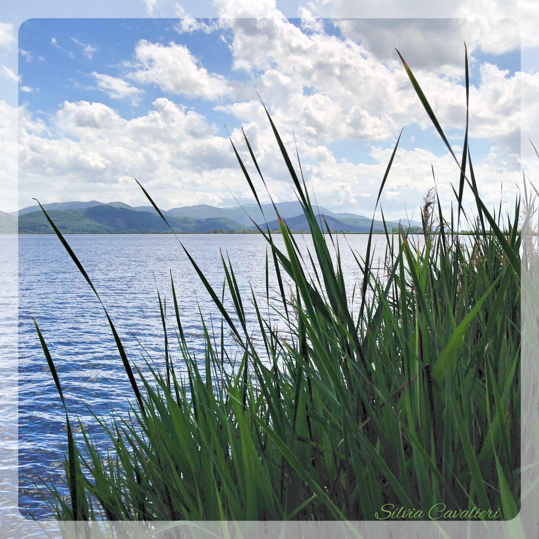le canne di Torre del lago