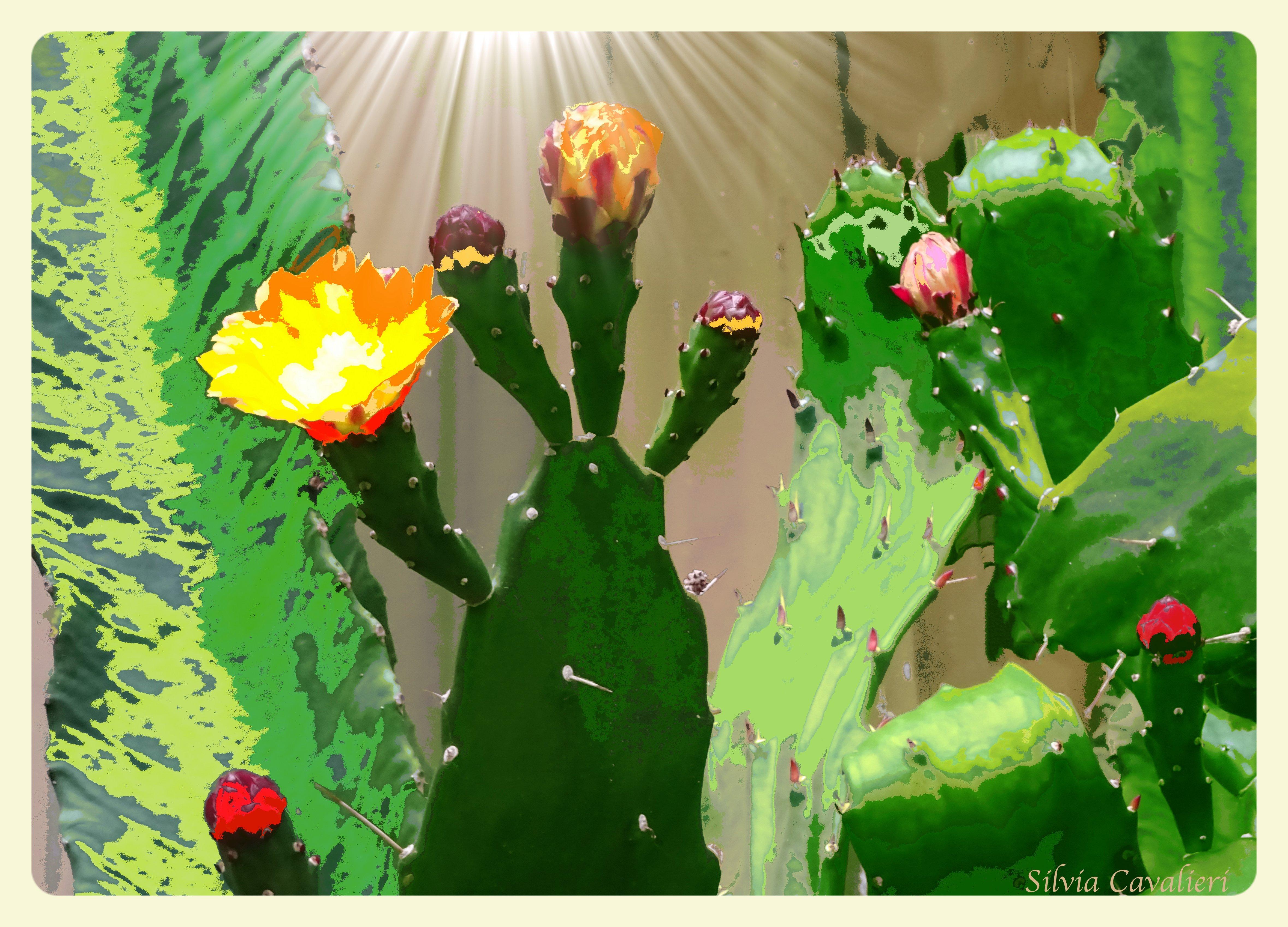 cactus pittorici con sole