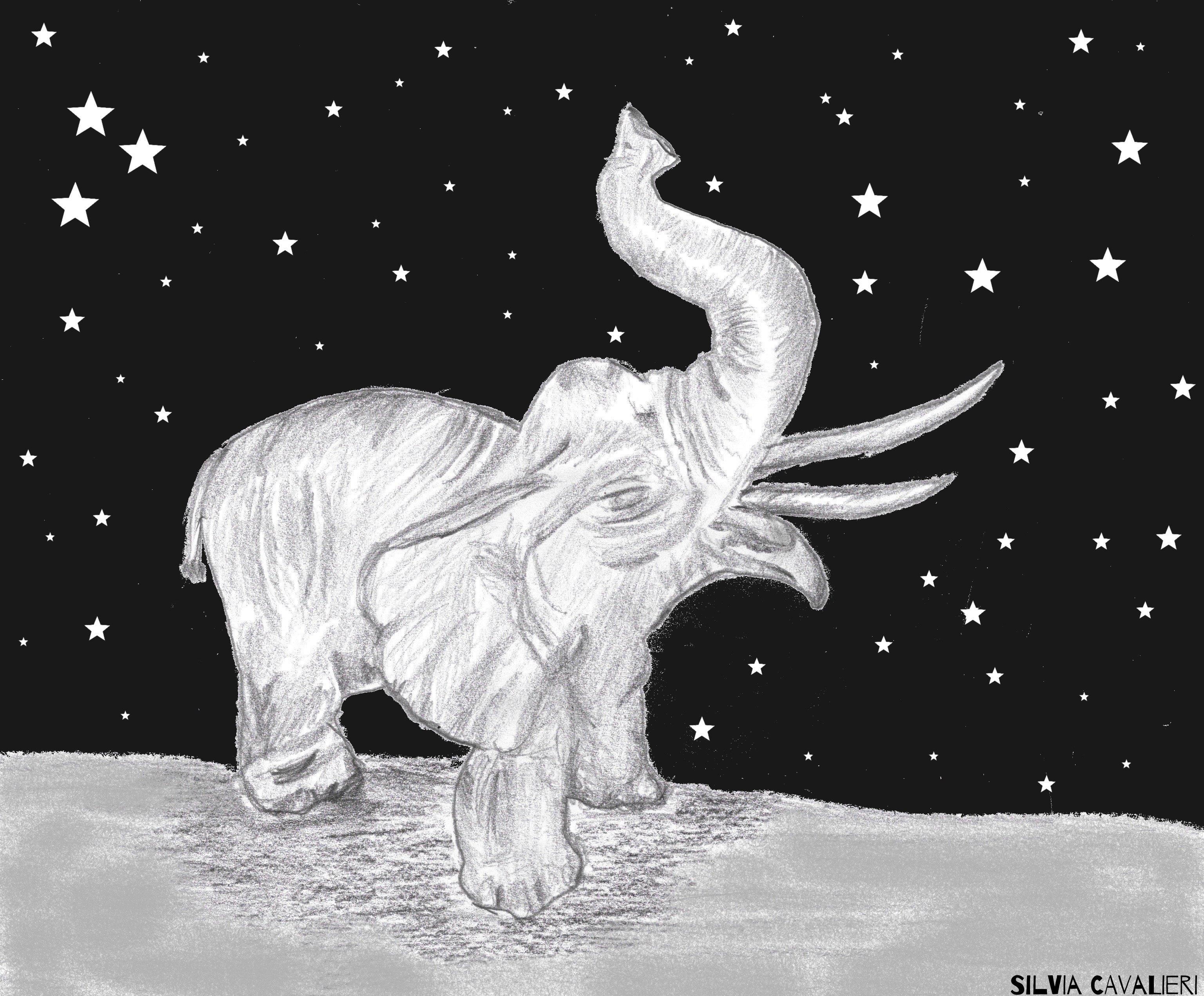 Elefante di notte
