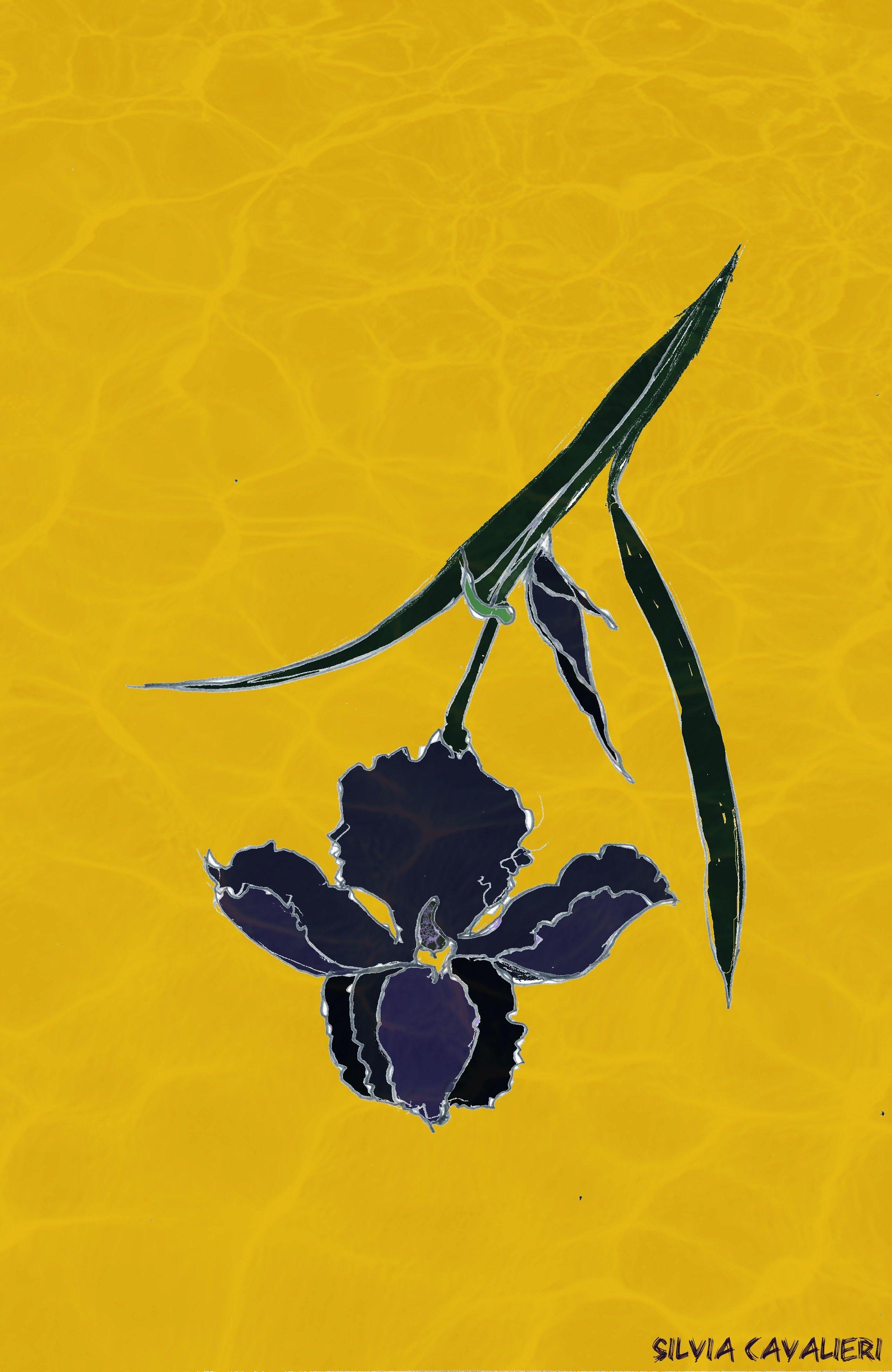 iris-in-dissoluzione