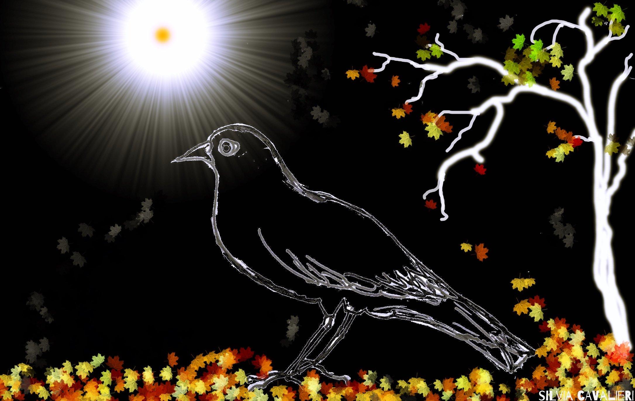 merlo-nero-cielo-nero