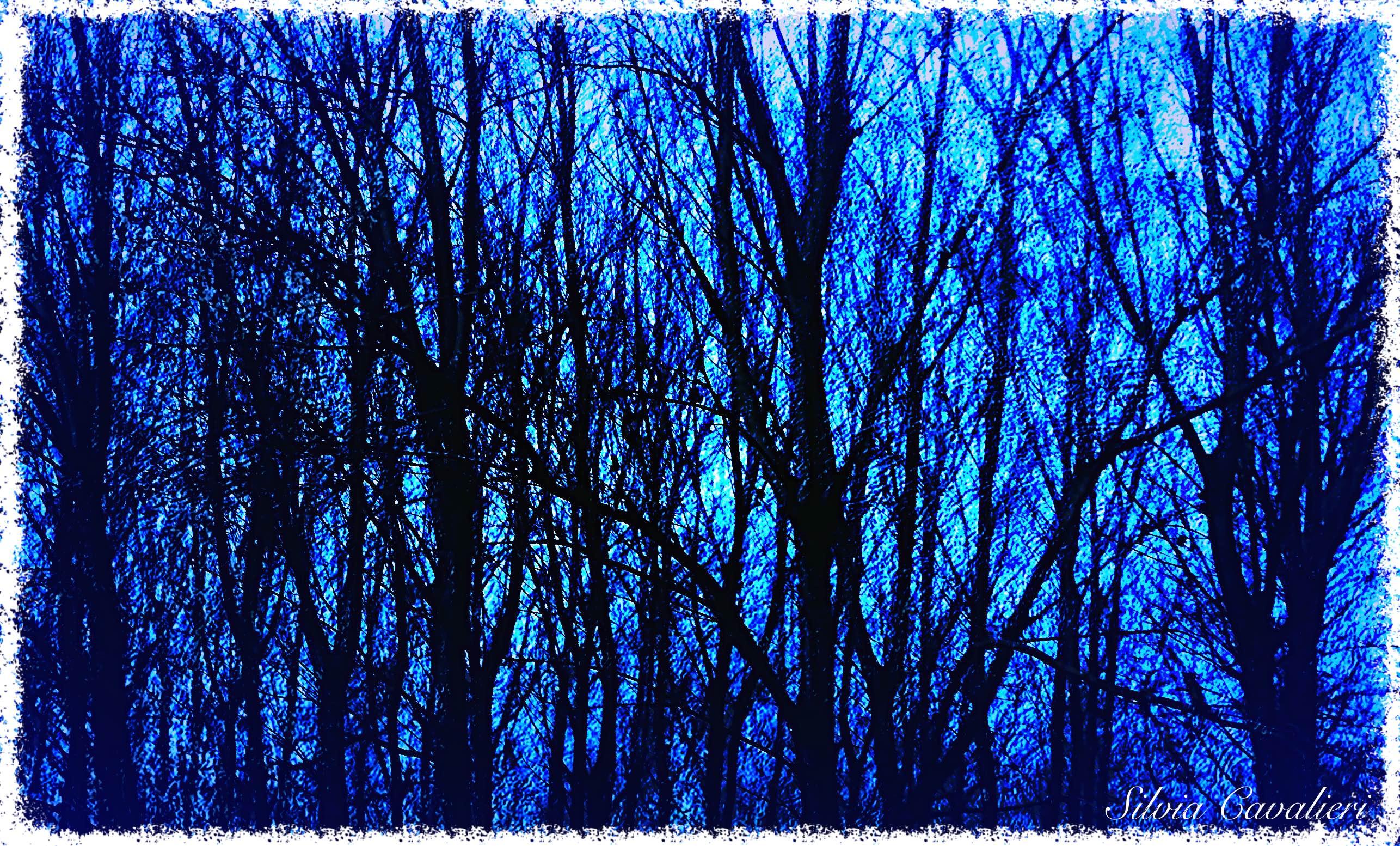 bosco-nudo