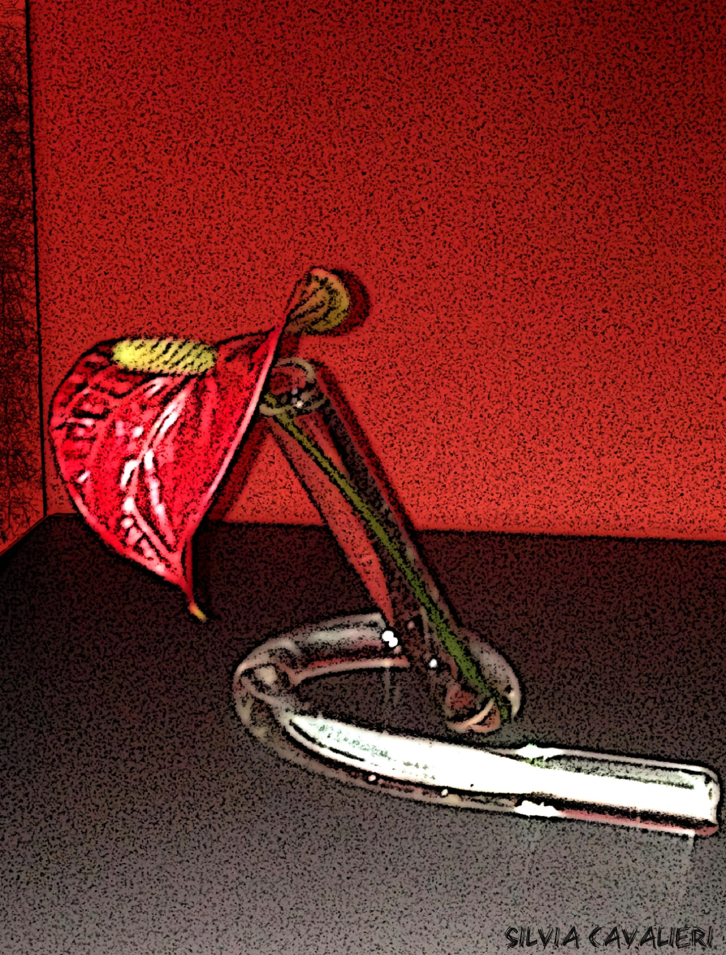 Anturium su fondo rosso