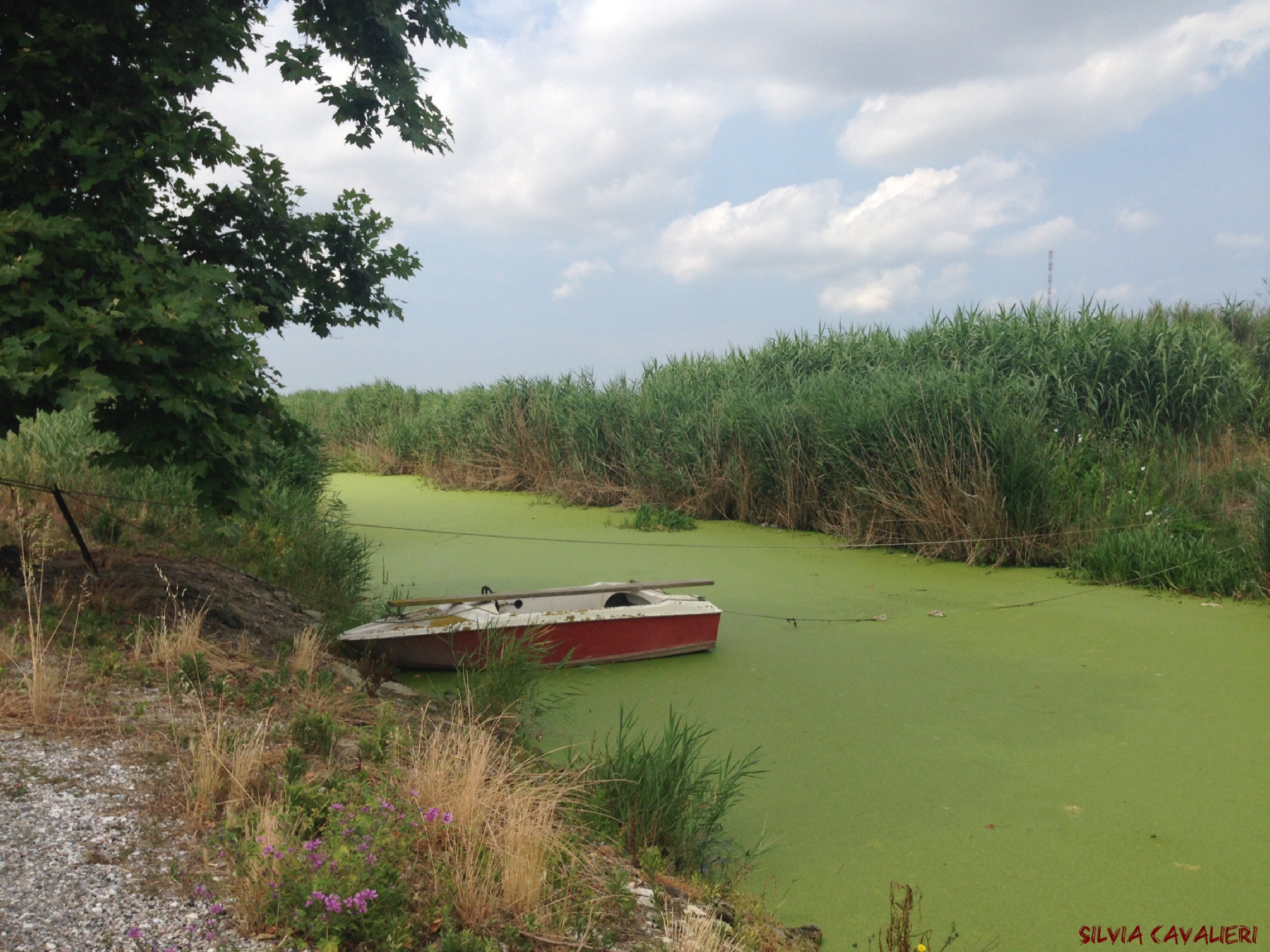 canale verde